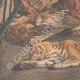 DETTAGLI 05 | Morte degli animali della menagerie nel fuoco alla Esposizione di Bruxelles - Belgio - 1910
