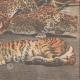 Einzelheiten 06 | Tod der Menagerietiere im Feuer die Brüssel International - Belgien - 1910