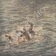 DETTAGLI 05 | Un bambino salva un altro bambino dall'annegamento nel canale di Givors - Francia - 1910