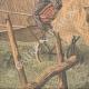 DETALJER 03   En ko förvånad av ett flygplan på en gräsmarker i USA - 1910