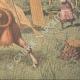 DETALJER 06 | En ko förvånad av ett flygplan på en gräsmarker i USA - 1910
