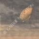DÉTAILS 01 | Naufrage d'un dirigeable tentant la traversée de l'Atlantique - Caroline du Nord - 1910