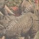 Einzelheiten 04 | Nashorn gegen Elefanten (Indien) - 1910