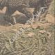 Einzelheiten 06 | Nashorn gegen Elefanten (Indien) - 1910
