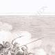 DÉTAILS 02 | Mort de Duplessis à la bataille de Bir el Bar (Egypte)