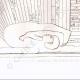 DETAILS 04 | Ceiling of the temple of Tentyris - Dendérah (Egypt)