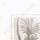DETTAGLI 01 | Albero votivo (Egitto)