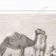 DETAILS 03 | Denon visitando as ruínas de Hieracômpolis (Egito)
