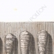 DETAILS 02 | Mummified ibis (Egypt)