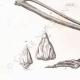 DETAILS 05 | Ibis Skeletten (Egypte)