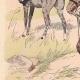 Einzelheiten 02 | Pferdeartillerie Preußen - Offizier - Militärkleidung (1805)