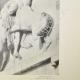 DETAILS 06 | Metopen van het Parthenon - Centaur (Griekenland)