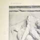 DETALJER 01 | Parthenon metop - Kentaur (Grekland)