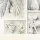 DÉTAILS 04 | Métopes du Parthénon - Face sud - X et XII - Centaure (Grèce)
