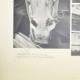DETAILS 05 | Gezicht op het Parthenon - Oostfronton - kop van het Paard van een Selene (Griekenland)
