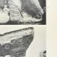 Einzelheiten 04 | Ansicht von den Parthenon - Westpediment - Athene und Poseidon (Griechenland)