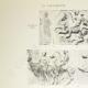 DÉTAILS 01 | Parthénon - Frise ionique de la Cella - Face ouest - Vue d'ensemble - Pl. 76
