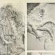 DETALJER 02 | Parthenon - Ionisk fris i Cella - Syd - Pl. 94