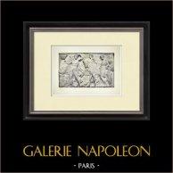 Partenone - Fregio ionico della Cella - Lato nord - Pl. 103