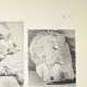 Einzelheiten 03 | Parthenon - Ionenfries von Cella - Nord Seite - Pl. 115