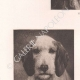 DÉTAILS 02   Têtes de chiens (Rosa Bonheur)