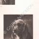 DÉTAILS 04   Têtes de chiens (Rosa Bonheur)
