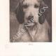 DÉTAILS 05   Têtes de chiens (Rosa Bonheur)