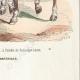 DÉTAILS 06   Trompette des Dragons de l'Impératrice - Timbalier des chevau-légers - Garde Impériale (1812)