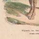 DÉTAILS 03   Régiment de dromadaires - Cavalerie - Bonaparte - Campagne d'Egypte (1799)