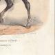DÉTAILS 06 | Officier des Chasseurs à cheval de la Garde Impériale (1812)