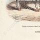 DÉTAILS 05 | Chasseurs à cheval de la Garde Impériale - Timbalier