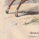 DÉTAILS 03   Chevau-Légers français - Cavalerie (1812-1815)