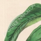 DETTAGLI 01 | Fiori - Bignonia - Bignoniaceae