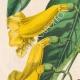 DETTAGLI 02 | Fiori - Bignonia - Bignoniaceae