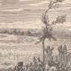 DETALLES 01 | Batalla de Waterloo - Tácticas militares - Mariscal Grouchy (1815)