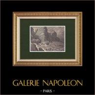 Contrabbandiere - Napoleone Buonaparte | Incisione xilografica originale disegnata da Philippoteaux, incisa da Sargent. 1870