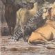 DÉTAILS 03 | Peuple Dinka - Ethnie - Nil - Agriculture - Élevage (Soudan du Sud)