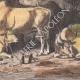 DÉTAILS 04 | Peuple Dinka - Ethnie - Nil - Agriculture - Élevage (Soudan du Sud)