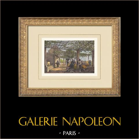 Villa Mentonnaise - Côte d'Azur (France) | Gravure sur bois originale dessinée par Taylor, gravée par Laplante. Aquarellée à la main. Texte au verso. 1874