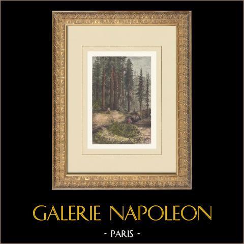 Calaveras Big Trees State Park - Kalifornien (Vereinigten Staaten von Amerika) | Original holzstich gezeichnet von Taylor, gestochen von Laplante. Handaquarelliert. Text auf der rückseite. 1874
