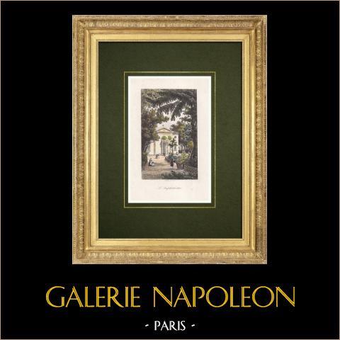 Jardin des Plantes w Paryżu - Ogród Botaniczny - Amfiteatr |