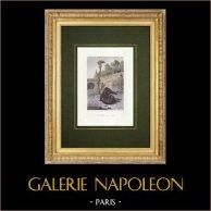 Jardin des Plantes a Parigi - Menagerie - Fossa degli Orsi   Stampa calcografica originale a bulino su acciaio disegnata da Leullier, incisa da Collignon. Acquerellata a mano. 1842
