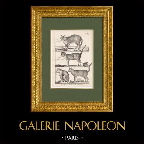 Serval - Gato calicó - Chartreux - Felídeos   Gravura original em talho-doce sobre cobre sobre papel vergê. Bénard direxit. 1790