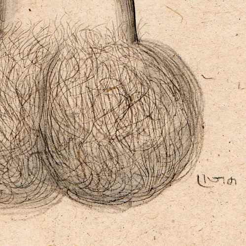 Free online erotic document