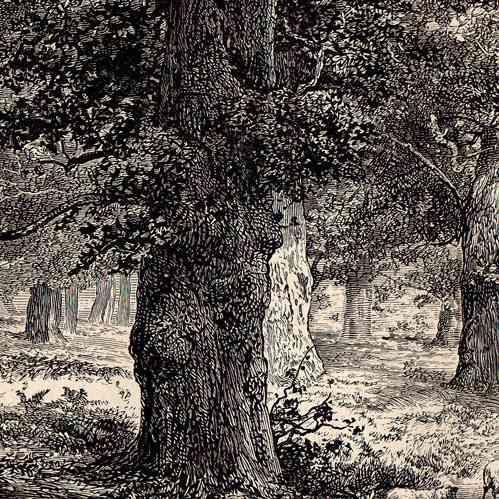 gravures anciennes gravure de for t de sherwood edwinstowe nottinghamshire angleterre. Black Bedroom Furniture Sets. Home Design Ideas
