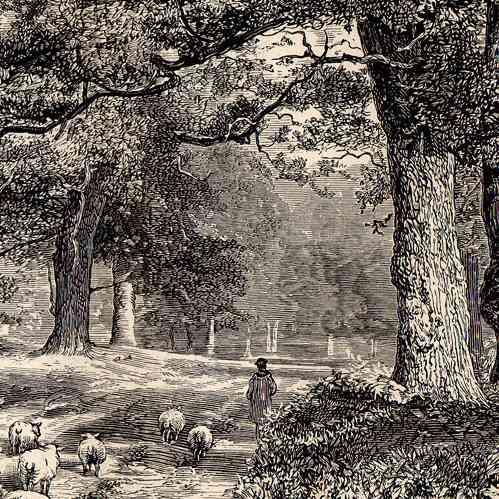 gravures anciennes for t de sherwood edwinstowe nottinghamshire angleterre gravure sur. Black Bedroom Furniture Sets. Home Design Ideas
