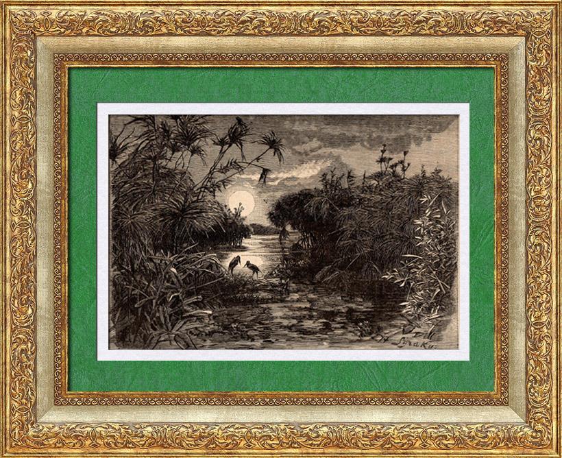 Gravures Anciennes & Dessins   Vue de Sicile (Italie) - Végétation - Papyrus   Gravure sur bois   1891