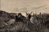 View of Italy - Ox herd near Cervara - Rome