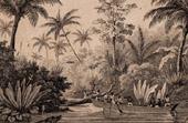 Brazil - Navigation on the Rio Doce