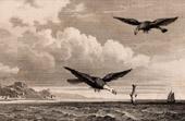 United States of America - Eagle